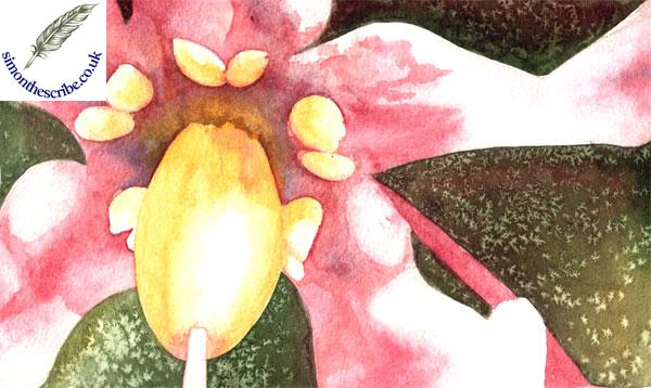 flower portrait 1