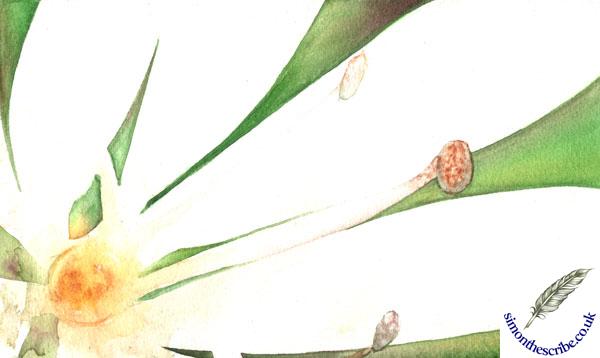 image flower portrait 3