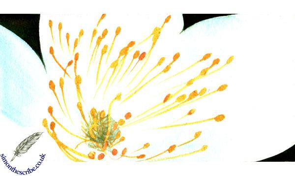 image flower portrait 5