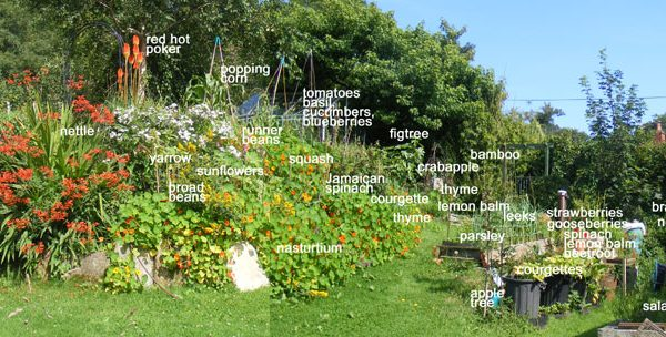 my garden later in the year