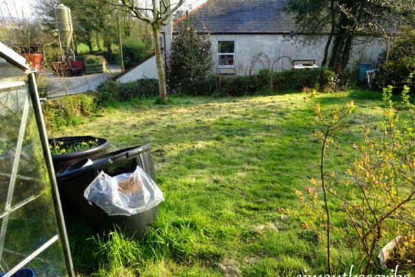 the lawn in my garden